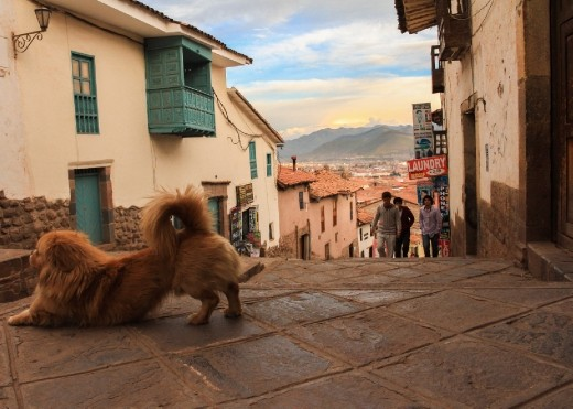 This dog's size must be compromised with the high atmospherical pressure of the Andean region. Nevertheless, he stretchs happily with Cusco at his feet. I put my self at the eye level of this dog to convey why would it look to be on his paws, staring at the imperial city of Cusco!