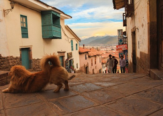 'Dog Day Afternoon' Chapter 4. I walked up one of Cusco's most sloped streets to see the city from a high spot. Wait, not that high. I deliberately crouched to reach the eye level of this pintoresque dog, as if I were just another pooch, his pal, standing right there at the heart of the Imperial City of the Incas.
