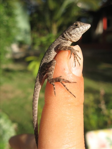 A little lizard on my finger.