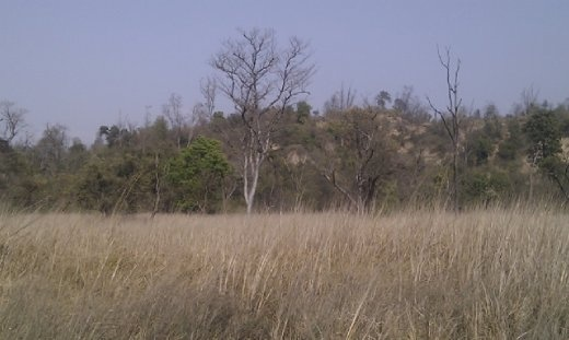 Dry grassland