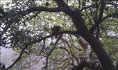 Monkey: by macedonboy, Views[121]