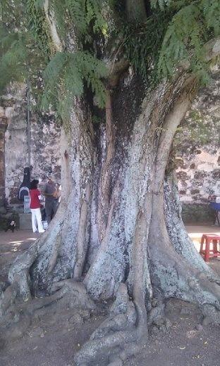 Tree at Saint Paul's Church