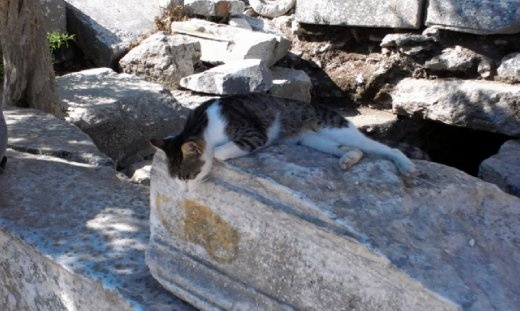 Cat spending quality time at Library of Celsus