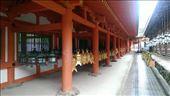 Kasuga Taisha Shrine: by macedonboy, Views[42]