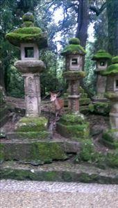 Nara Park - Some random fawn: by macedonboy, Views[109]