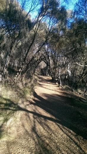 Tracks down Mt. Ainslie towards Australian War Memorial