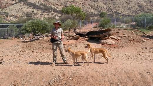 Dingo enclosure at Desert Park