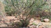 Crimson Chats at Desert Park: by macedonboy, Views[53]