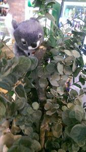 Not a Koala at Maru Koala & Animal Park: by macedonboy, Views[136]