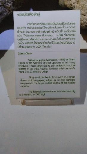 Description of Giant Clam