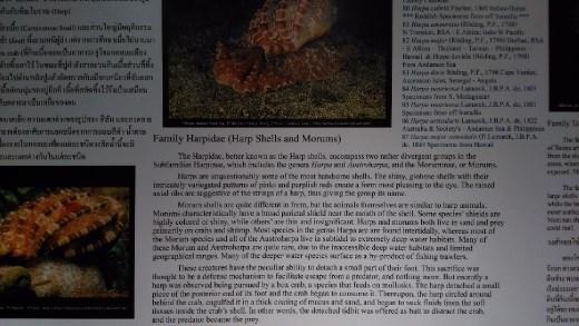 Description of Harp Shellfish