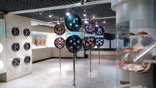 2nd floor of Shellfish Museum