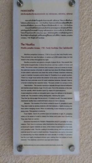 Description of Nautalus