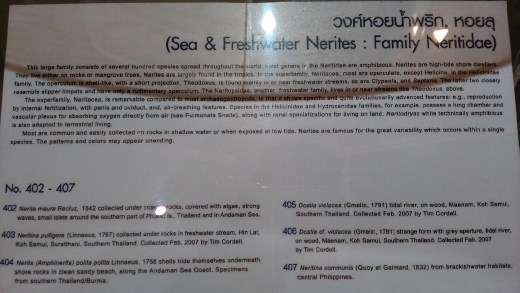 Description of Nerites