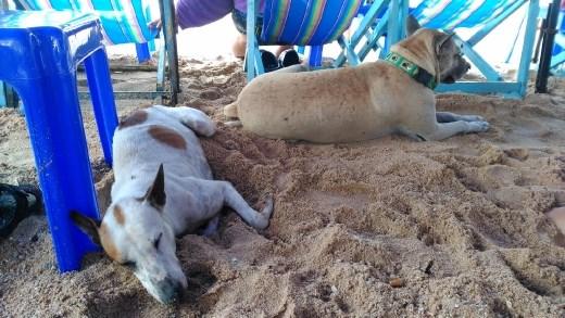 Pattaya Beach - Dogs sheltering from the rain