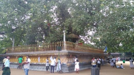 Shrine at Kelaniya Raja Maha Vihara