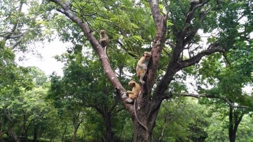 3 wise monkeys while leaving Manik Vehera