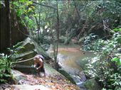 We went on a jungle hike to some waterfalls.: by machel, Views[290]