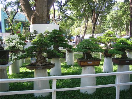 the vietnamese are big on their bonsais orchids and mini gardens - Vietnamese Garden