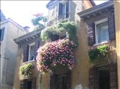 They take their window boxes seriously in Venice.: by machel, Views[684]