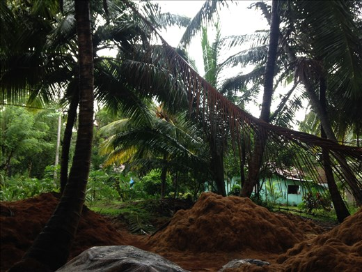 Coconut fibres to make rope
