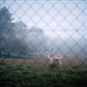 As I was driving around on a foggy day, I came across this little animal. I immediately stopped. I got off my car quietly and tried to photograph him before he escaped...He stayed still for a few seconds and offered me this amazing photograph...then he ran away.: by maellecollin, Views[60]