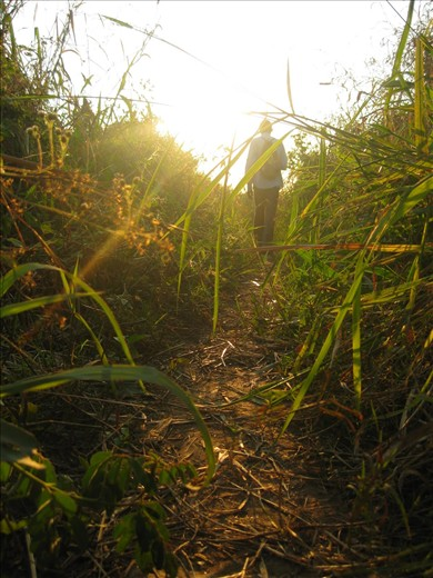 Jude, a percussionist for GTA, guides the way home through tall grass.