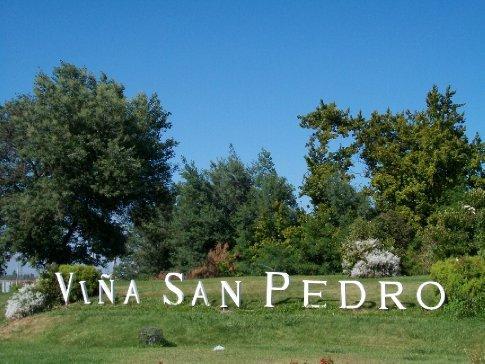 De Curicó, viemos a Molina, visitar minha primeira vinha: Viña San Pedro - cujo vinho mais conhecido no Brasil é o Gato Negro, que aqui é meio chulé. rs