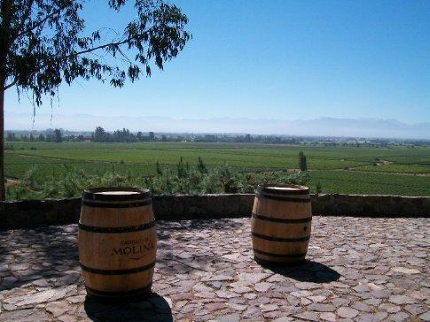 Vista panorâmica da plantação da vinícola.