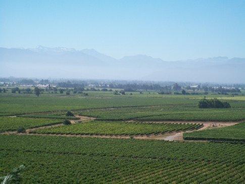 Mais uvas e, lááááá atrás, a cordilheira dos Andes.