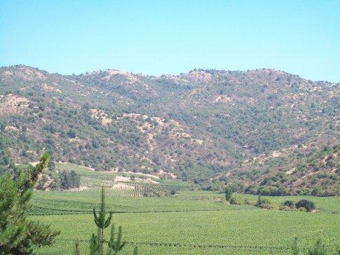 Na parte mais escura desta plantação, estão as delicadas uvas Pinot Noir, que aproveitam o corredor de vento entre as colinas para suportar o calor seco que faz quase o ano inteiro aqui.
