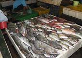 Mercado de pescado (4). Bali: by manuel, Views[87]