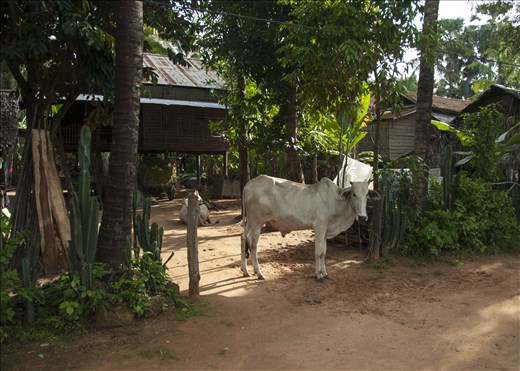 Casa bien protegida. Siem Reap. Camboya.