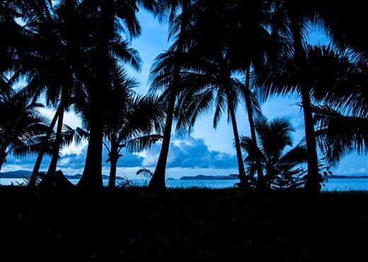 Perfil de palmeras. Puerto Barton