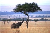 masaai mara: by mara90, Views[611]