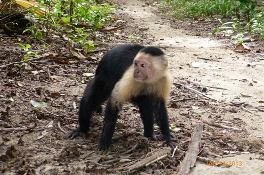 Capuchin Monkey who took a bite out of my  water bottle and hung off my fanny pack and hissed at me.