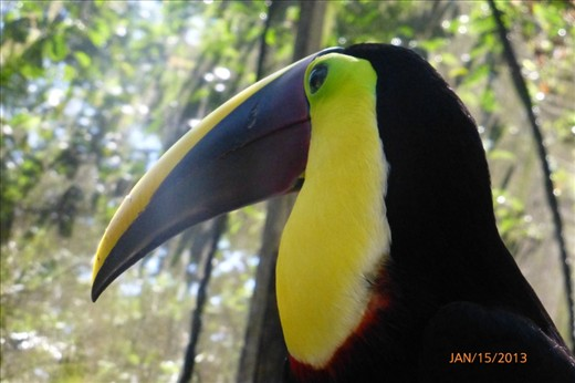 Toucan at the wildlife rescue center.