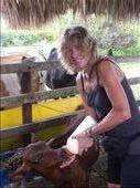 feeding a baby calf at our host families' finca in Tulua.: by margitpirsch, Views[288]
