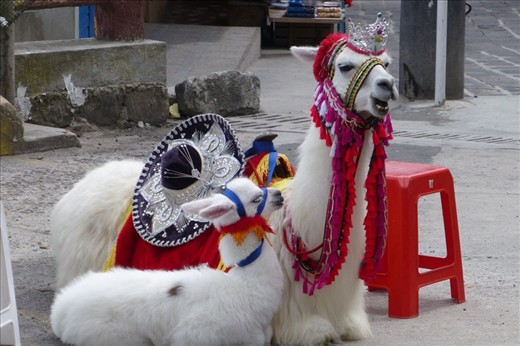 dressed up Lama and her baby