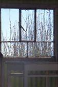 Reeds everywhere..: by margitpirsch, Views[120]