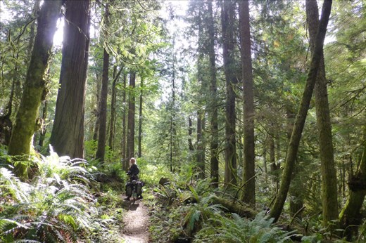 Enchanting 20 miles of beauty on the Olympic Adventure Trail
