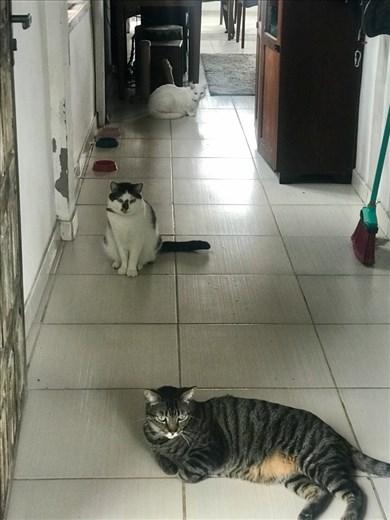 Vini, Kiria and Poli!!