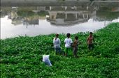 Young boys who gather water cress by the Marikina River.: by marissa_pco, Views[156]