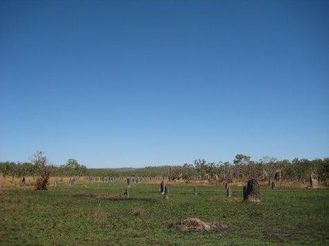 Megnetic termite mounds, Litchfield NP, NT