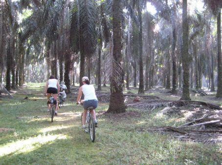 Bike riding in the palm forest near Melaka
