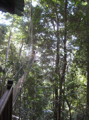The canopy walk, Taman Negara National Park