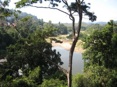 View of Taman Negara from the canopy top