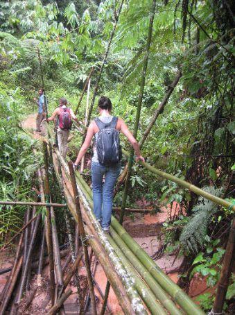 Trekking through the jungle, Cameron Highlands