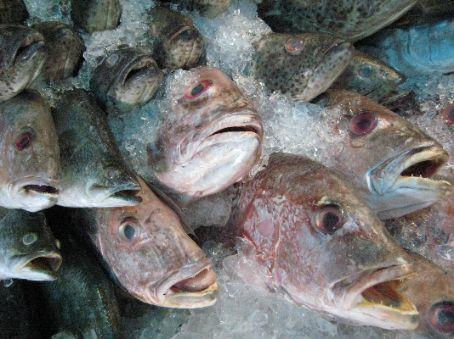 Fish stall at Psar Thmei market, Phnom Penh