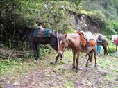 vendys horse: by matsmith, Views[398]